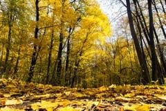 Herbstwaldlandschaft mit den Strahlen des warmen Lichtes das Goldlaub und einen Fußweg erhellend lizenzfreie stockfotografie