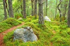 Herbstwaldlandschaft mit Gehweg Stockfoto