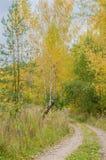 Herbstwaldlandschaft mit goldenen Blättern und schöner Natur Stockbild