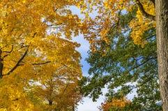 Herbstwaldlandschaft Warmes Licht, welches das Goldlaub und die grünen Nadeln erhellt Szenenherbst-Waldnatur stockfoto