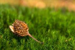 Herbstwaldmakro Lizenzfreie Stockfotografie