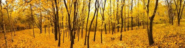 Herbstwaldpanorama Lizenzfreies Stockfoto