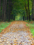 Herbstwaldpfad Lizenzfreie Stockbilder