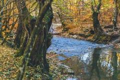 Herbstwaldschöne Farbblauer sauberer Fluss Stockfotos