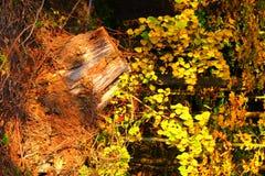 Herbstwaldschiefwinkliger Baumstumpf, vertikal Lizenzfreie Stockfotografie