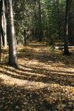 Herbstwaldspur Lizenzfreie Stockfotos