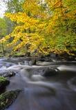 Herbstwaldstrom Lizenzfreies Stockfoto