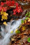 Herbstwaldstrom (vertikal) Stockfoto