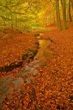 Herbstwaldszene Stockfotografie