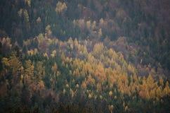 Herbstwaldtschechische Republik Lizenzfreies Stockfoto