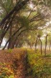 Herbstwaldung Lizenzfreie Stockbilder