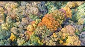 Herbstwaldvogelperspektive Mehrfarbige Fallbäume im Stadtpark Schönes buntes Saisonlaub stock video footage