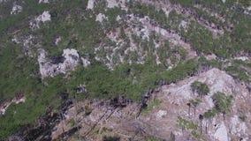 Herbstwaldvogelperspektive schuß Nebeliges wildes Holz Koniferenbaum des Waldes Hintergrundes gestaltet Reisekonzept landschaftli stock video