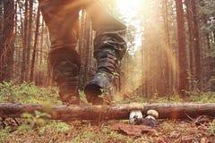 Herbstwaldwanderung Stockfotos