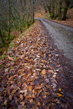 HerbstWaldweg Stockfotografie