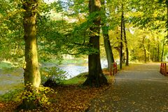 Herbstwaldweg durch den Fluss Stockbilder