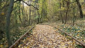Herbstwaldweg im Park stock footage