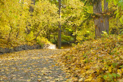 HerbstWaldweg mit Ahornblättern Stockfoto