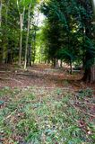 Herbstwaldweg mit Herbstfarben aus den Grund stockfotografie