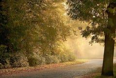 HerbstWaldweg mit Sonne des frühen Morgens rays Stockbild