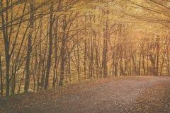 Herbstwaldweinlesebild Lizenzfreies Stockfoto