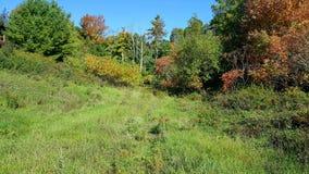 Herbstwanderwege Stockbilder