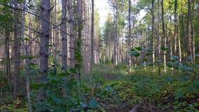 Herbstwanderwege Lizenzfreie Stockfotos