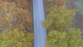 Herbstweg stock footage