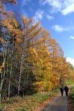 Herbstweg Lizenzfreie Stockfotografie