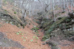 Herbstweg im Berg Stockfotos