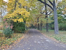 Herbstweg im Park der Stadt von Pavlovsk Lizenzfreies Stockbild