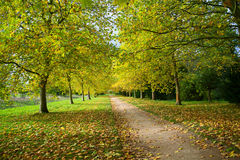 Herbstweg im Wald Lizenzfreies Stockbild
