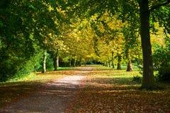 Herbstweg im Wald Stockfoto