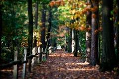 Herbstweg mit Bäumen Stockbild