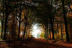 Herbstweg mit Bäumen Stockfotografie