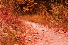Herbstweg mit gefallenen Blattaufstiegen lizenzfreie stockfotos