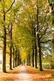 Herbstweg mit Leute- und Baumstämmen, die Niederlande Stockfotografie