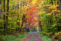 Herbstwegmethode Stockbild