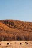Herbstweide Lizenzfreies Stockbild