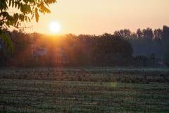 Herbstweidelandschaft mit der Sonne, die warm eine Bank unter einem Baum, viele Goldblätter und blauen Himmel erhellt lizenzfreie stockfotografie