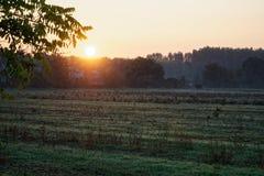 Herbstweidelandschaft mit der Sonne, die warm eine Bank unter einem Baum, viele Goldblätter und blauen Himmel erhellt lizenzfreies stockbild
