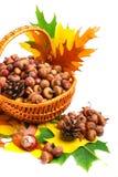 Herbstweidenkorb Stockbild