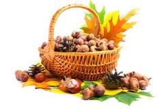 Herbstweidenkorb Lizenzfreie Stockfotos
