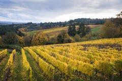 Herbstweinberge, Willamette-Tal, Oregon Lizenzfreies Stockfoto