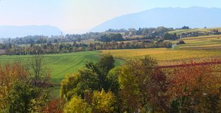 Herbstweinberglandschaft Stockfotografie