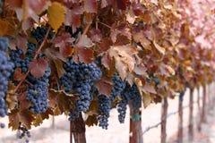 Herbstweinkellerei Stockfotos