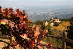Herbstweinkellerei lizenzfreie stockfotos