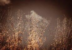 Herbstweinlesebäume Stockbilder