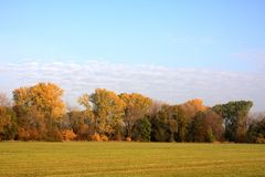 Herbstwiese stockbild