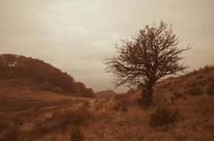 Herbstwiese am bewölkten Tag Lizenzfreie Stockfotografie